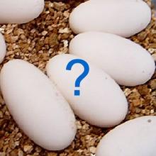 Quizz : A qui sont ces oeufs ?