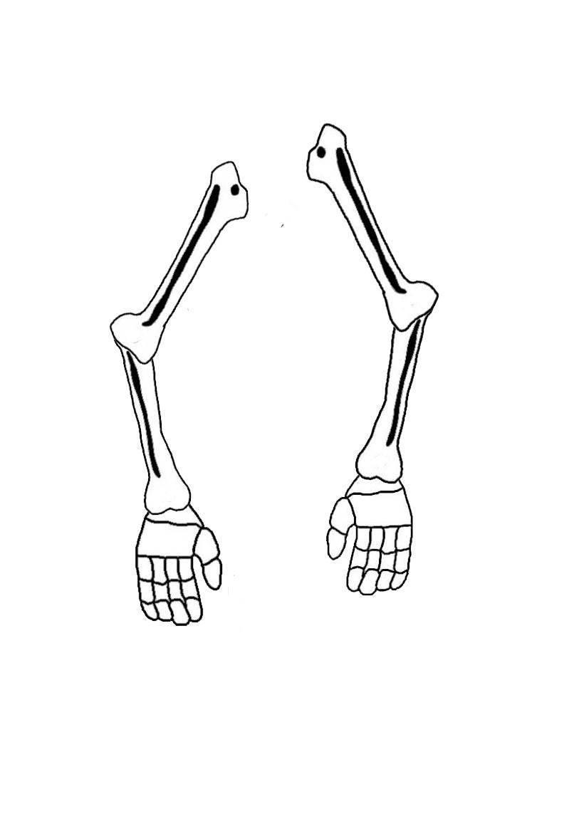 Activit s manuelles le squelette articul d 39 halloween fr - Dessin de squelette ...