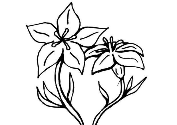 Coloriages coloriage de fleurs de gentiane - Fleur en coloriage ...