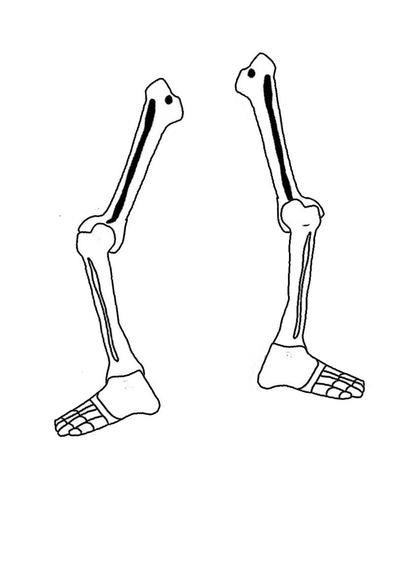 Les jambes du squelette d'Halloween