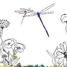 Coloriage d'une libellule dans les fleurs