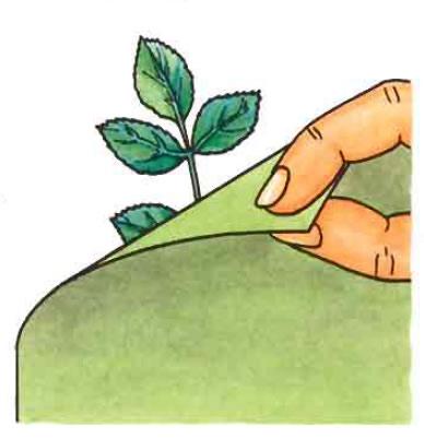 Carte à feuilles placer les feuilles