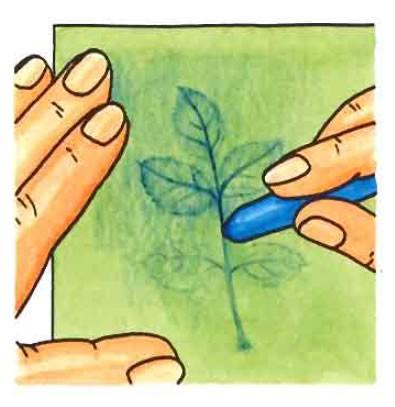 Carte à feuilles : décalquer