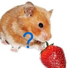 Qui mange quoi ?