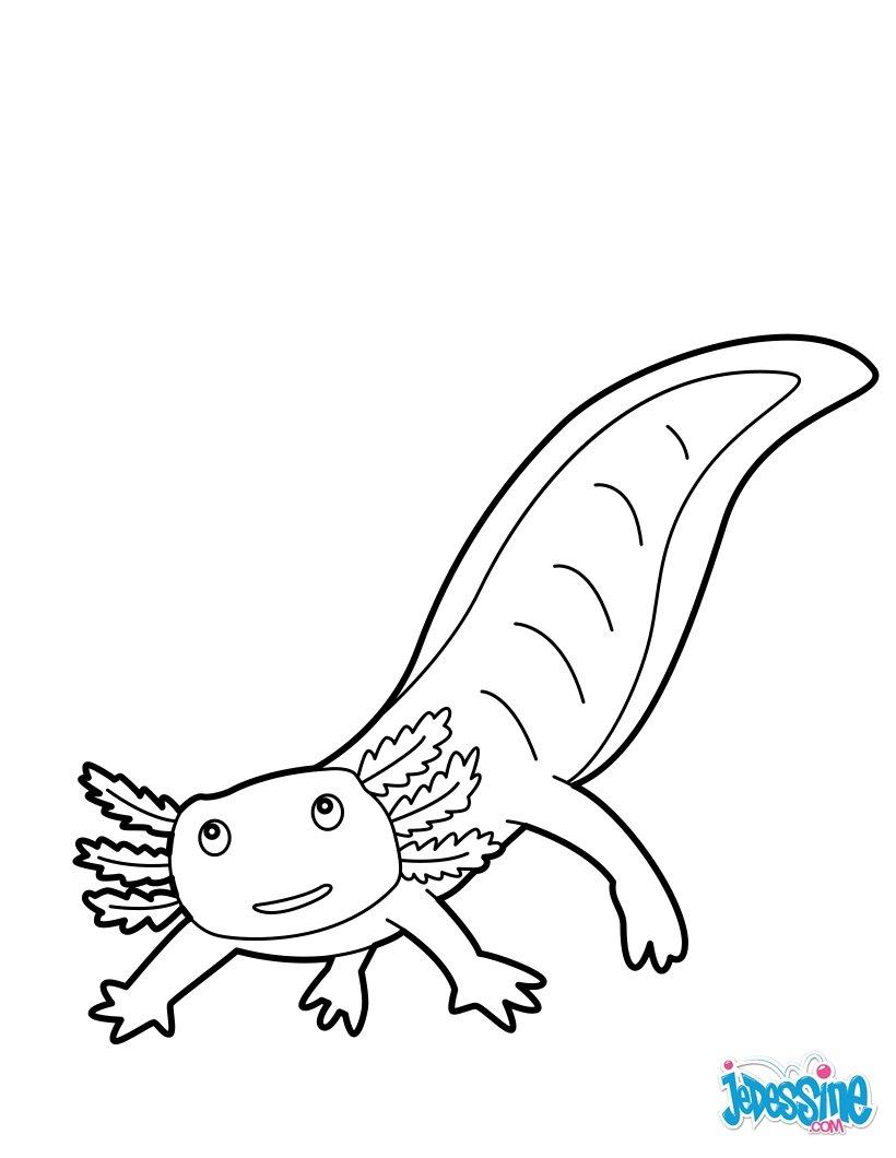 Coloriage : Axolotl