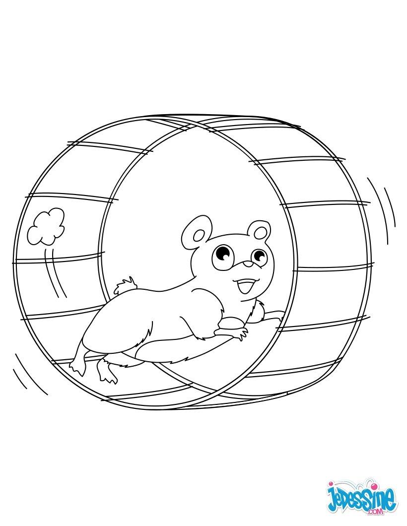 Coloriages hamster dans sa roue - Hamster gratuit ...