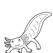 axolotl coloring pages - photo#37