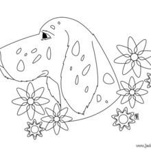 Coloriage de chien : Portrait de chien