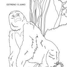 Coloriage : Trek, le singe