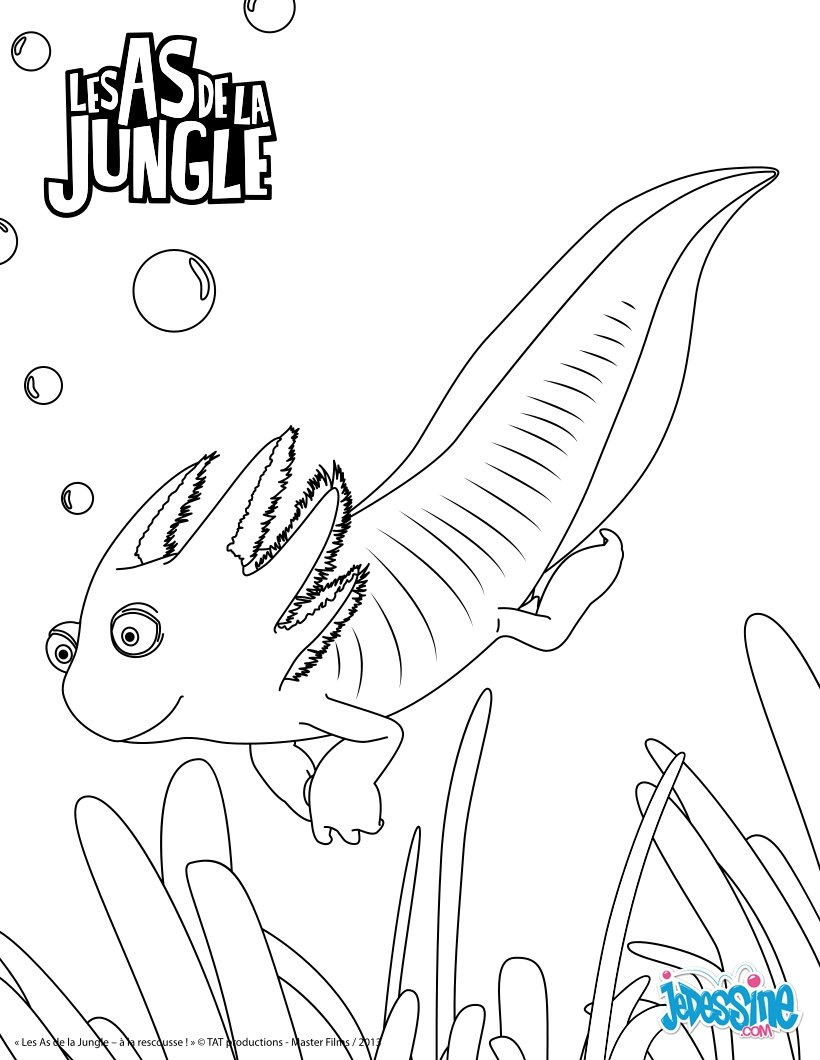 Coloriages patrick - Dessin de jungle ...