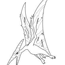Coloriage : Pteranodon