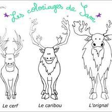 Coloriage : Cerf, Caribou, Orignal