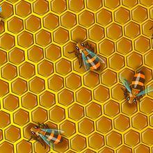 Fond d'écran : Abeilles dans une ruche