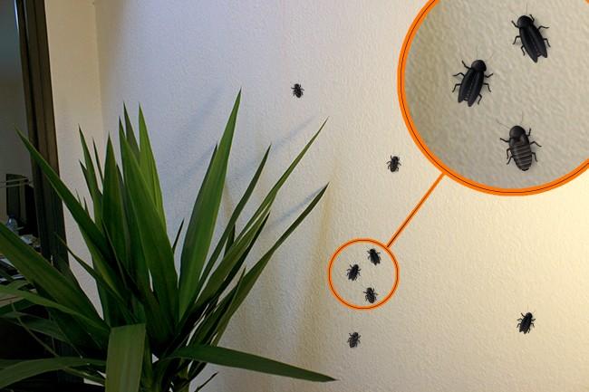 Les insectes en trompe-l'oeil