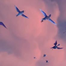Les oiseaux peuvent-ils voler sur le dos ?
