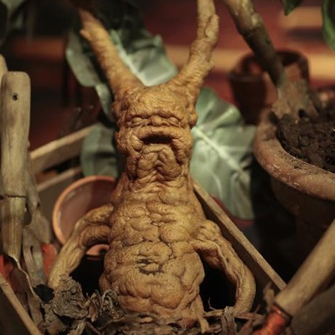vid os pour enfants de les plantes magiques dans l 39 univers
