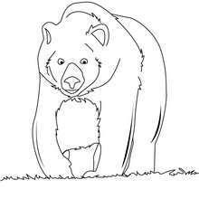 Coloriage d'un ours qui se promène