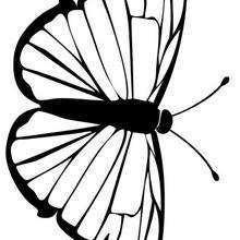 Coloriage d'un papillon N°10