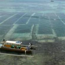 La culture des algues