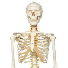 Reportage : Le squelette humain