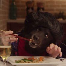 Vidéo : Parodie des humains par les animaux