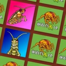 Le memory des Insectes