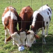 Puzzle Vaches