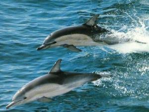 les-dauphins