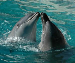 Les dauphins - Lecture - Reportages - Animaux