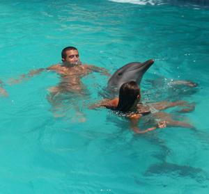galerie-photos-sur-les-dauphins-n-1
