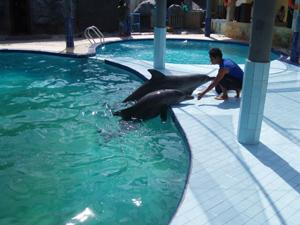galerie-photos-sur-les-dauphins-n-3