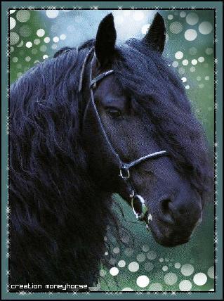 Vid os pour enfants de les chevaux et grand galop trop - Coloriage chevaux grand galop ...
