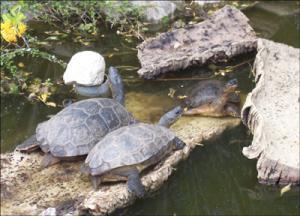 la-vallee-des-tortues
