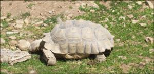 la-vallee-des-tortues