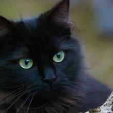 Reportage : Tout savoir sur les chats