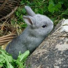 Reportage : Le lapin domestique