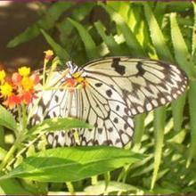 Galerie photos de la ferme aux papillons