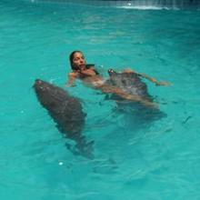 Galerie photos sur les dauphins N°1