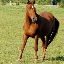 Le cheval