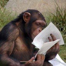 Les animaux sont-ils intelligents?