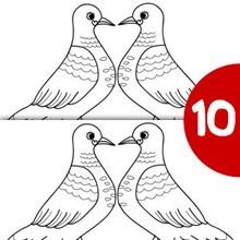 Jeu des différences : Couple de pigeons