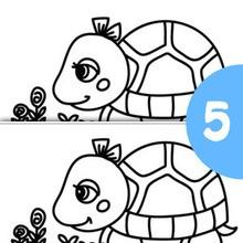 Jeu des différences : Le bébé tortue