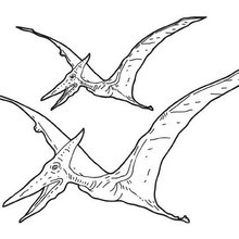 Coloriage : Ptérosaures