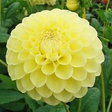 Le langage des fleurs : D à H