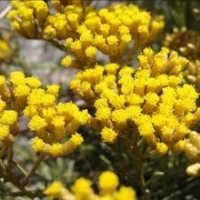 Reportage : Le langage des fleurs : I à M
