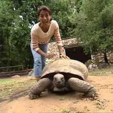 Vidéo sur les tortues