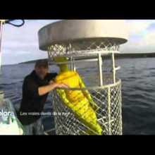 Vidéo sur le grand requin blanc