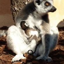 Provence alpes c te d 39 azur 512 id es sorties en famille for Jardin zoologique tropical