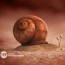 Rêve d'escargot