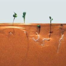 La croissance des plantes